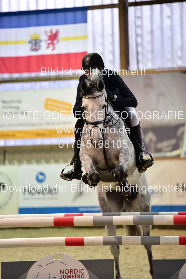 Prfg-Nr-3---Springpferde-L-_097.jpg